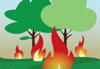 Πολιτική Προστασία, Δασικές Πυρκαγιές